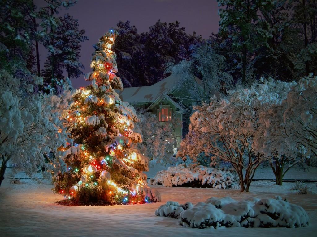 outdoor-weihnachtsbaum